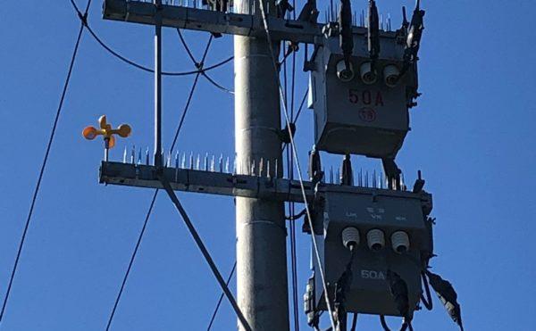 宮崎県 カラス対策 鳥害被害